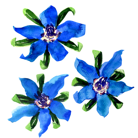 Fresh blue borage flowers (starflower) isolated, watercolor painting on white background