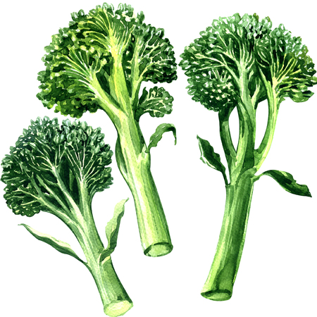 Three green bimi, broccoli isolated, watercolor painting on white background