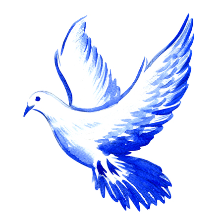 dove in flight: free flying white dove isolated, watercolor illustration on white background Stock Photo