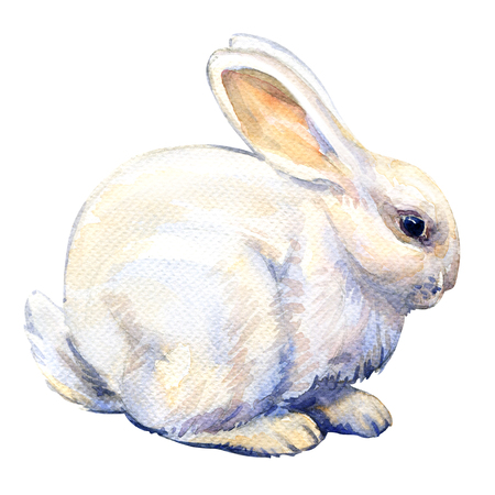 White bunny rabbit isolated, watercolor illustration on white background
