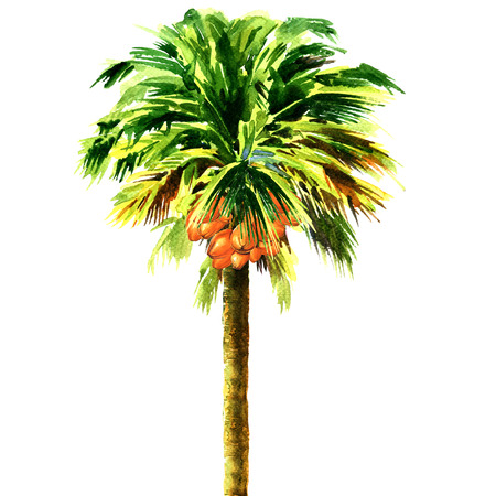 palm of hand: coconut palm tree isolated, watercolor illustration on white background