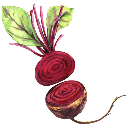 beetroot: Fresh beetroot with leaves isolated, watercolor illustration on white background