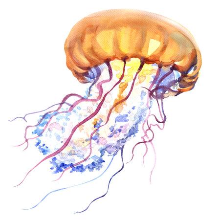 オレンジ海水クラゲやクラ ゲの分離、海の生活、白い背景の水彩画のイラスト