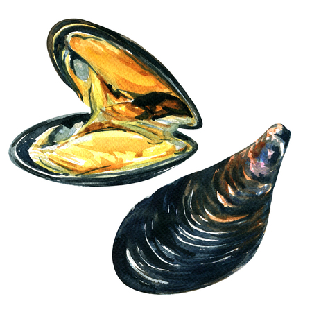 appetizers: close up of appetizing fresh sea mussels, watercolor illustration on white background