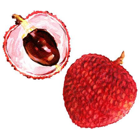 달콤한 신선한 라이치 열매는 흰색 배경에 고립 된, 수채화 그림을 닫습니다. 스톡 콘텐츠