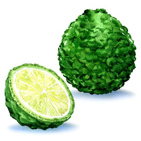 Green fresh bergamot fruit whole and slice, isolated, watercolor illustration on white background