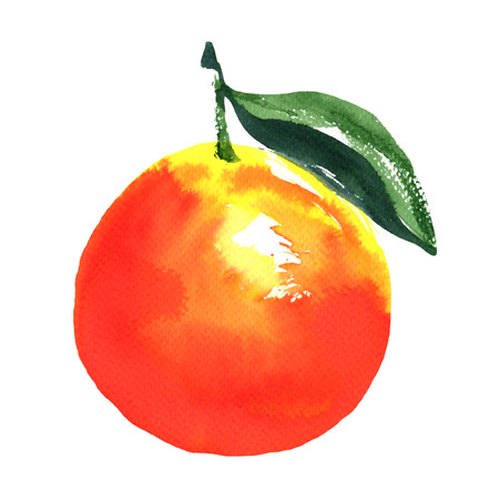 nature one painted: Ripe orange with leaf, watercolor illustration on white background Stock Photo