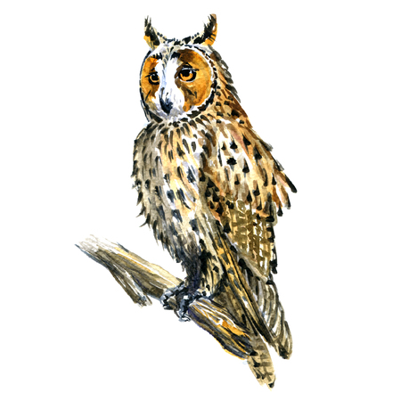 horned: Boho or Great Horned owl bird on branch isolated, watercolor illustration on white background Stock Photo
