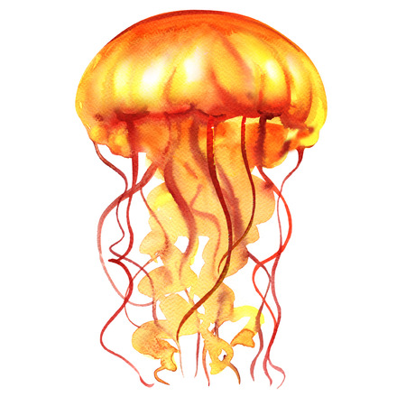 Orange Ocean Water Jellyfish or medusa isolated, sea life, watercolor illustration on white background 版權商用圖片