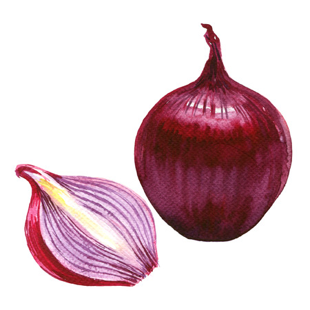 onion isolated: Red sliced and whole onion isolated, watercolor illustration on white background
