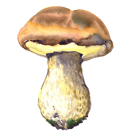 cep: Forest, edible boletus edulis mushrooms, porcini mushroom, cep, isolated, watercolor illustration on white background