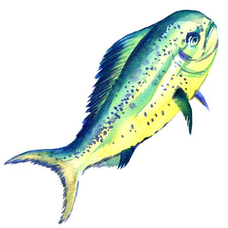 dorado: Raw fish dorado isolated, watercolor illustration on white background Stock Photo