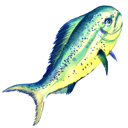 Raw fish dorado isolated, watercolor illustration on white background Stock Photo