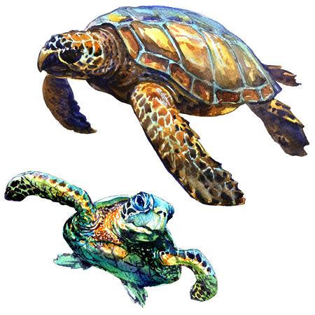 dibujo: Mar tortuga verde aislado, juego, ejemplo de la acuarela en el fondo blanco