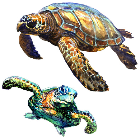 Sea green turtle isolated, set, watercolor illustration on white background Imagens
