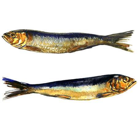 Two smoked sprats fish closeup isolated, watercolor illustration on white background