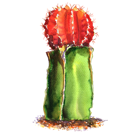 cactus species: Green, red cactus species isolated, watercolor illustration on white background Stock Photo