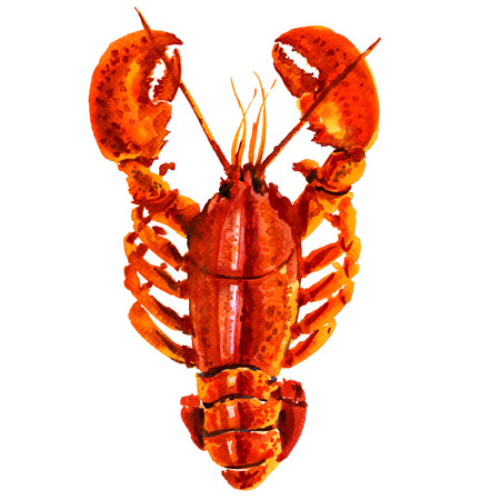 Boiled red crayfish isolated, watercolor illustration on white background
