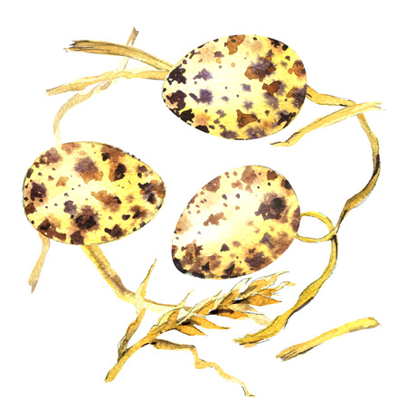 Quail egg with straw isolated, watercolor illustration on white background