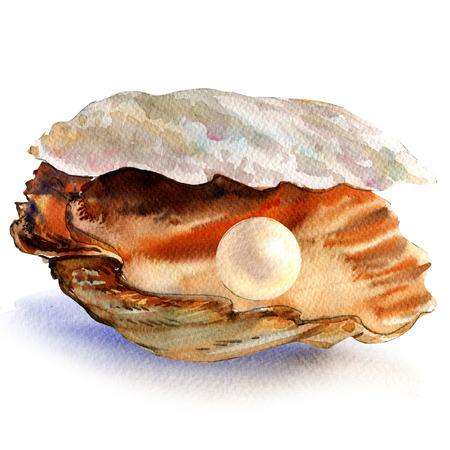 oyster shell: Open oyster shell with beautiful white pearl isolated, watercolor illustration Stock Photo