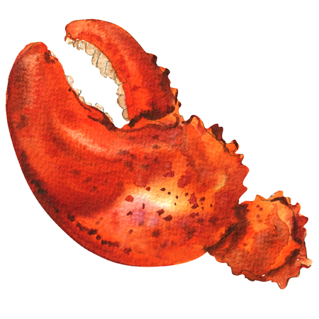 Boiled whole red crab claw isolated, watercolor illustration on white