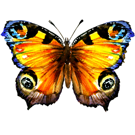 Beautiful European Peacock butterfly with open wings, top view, isolated, watercolor illustration on white Stock Photo