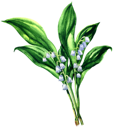 mayflower: Lily of the valley, bouquet of spring flowers, isolated, , watercolor illustration on white