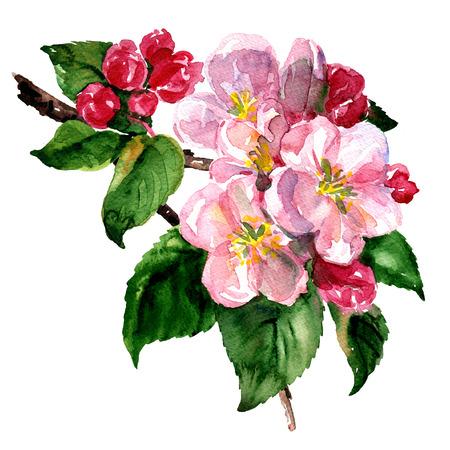 緑の葉と白い花のりんごや桃の花の枝。分離した、白い背景の上の春水彩イラスト 写真素材