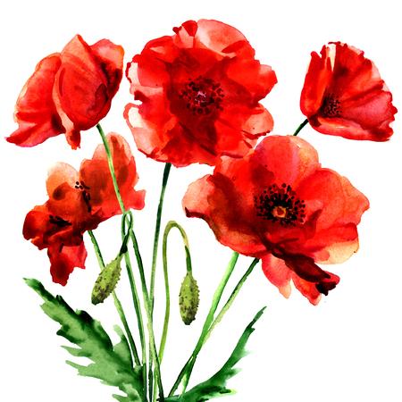 ロマンチックな夏の赤いケシの花分離、白の水彩イラスト
