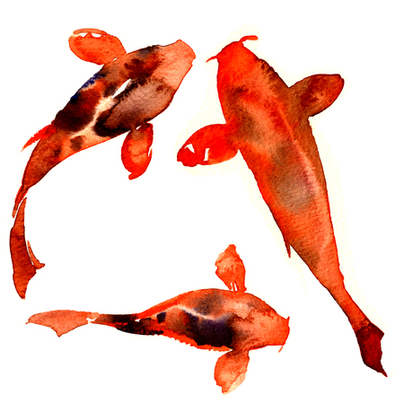 Red japanese oriental koi rainbow carps, fishes isolated, watercolor illustration on white Stock Photo