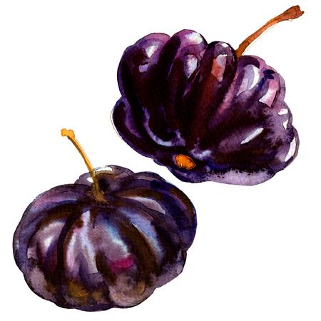 Black Suriname Cherry Pitanga, Tropical Eugenia uniflora fruit, isolated, watercolor illustration on white