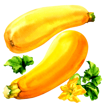 watercolour: Raw yellow zucchini with leaf and flower, two fresh vegetables, isolated, watercolor illustration on white
