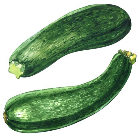 新鮮な緑ズッキーニ、ズッキーニが分離された分離された、2 つのオブジェクト白の水彩イラスト