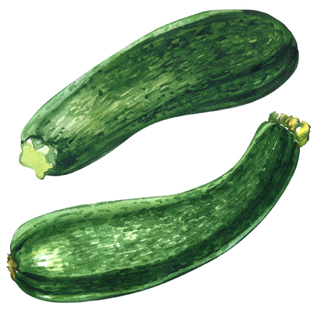 Fresh green zucchini or courgette isolated isolated, two objects, watercolor illustration on white Фото со стока
