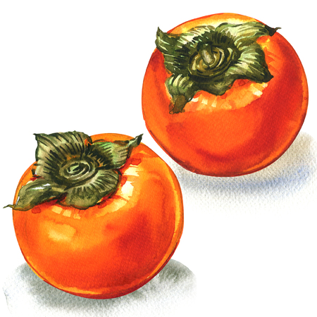 Fresh ripe orange persimmon, two fruits, isolated, watercolor illustration on white