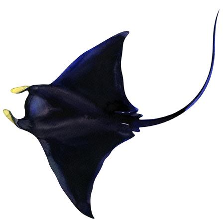 Schwarze Manta Ray. Fisch Ozean isoliert, Aquarell Illustration auf weiß