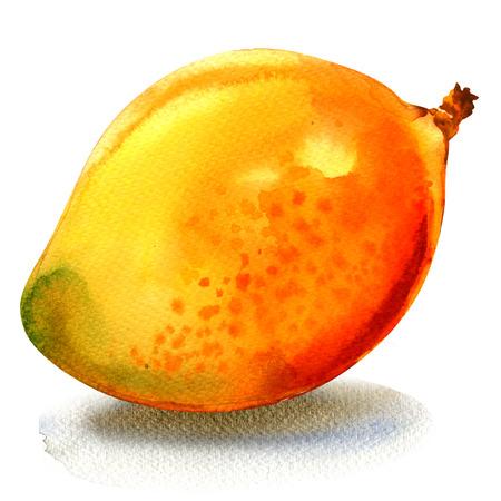 Ripe tasty sweet juicy mango, whole fruit isolated, watercolor illustration on white