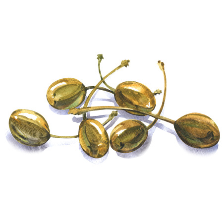 Heap of whole canned capers, edible fruits Capparis spinosa, caper bush, flinders rose, isolated, watercolor illustration on white