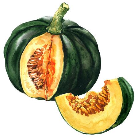スライス、白秋野菜分離、水彩イラスト グリーンパンプキン