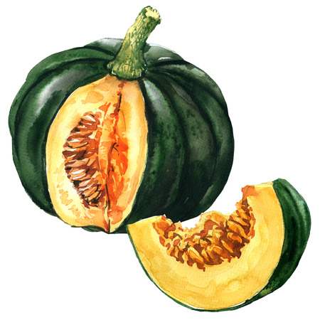 nature one painted: Green pumpkin with slice, autumn vegetable isolated, watercolor illustration on white Stock Photo