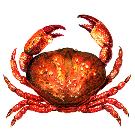 Red crab, fresh seafood or shellfish food, isolated, top view, watercolor illustration on white Stock Photo