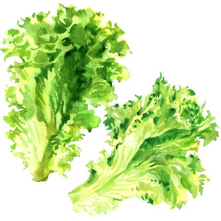 2 つの新鮮な緑のレタスのサラダ白の分離、水彩イラストを葉します。