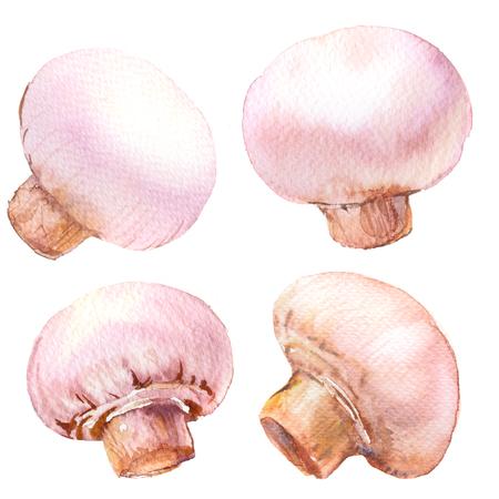 Set of white champignon mushrooms, isolated, watercolor illustration on white