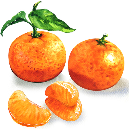 Ripe tangerine or clementine with green leaf, orange citrus fruits peeled segments, isolated, watercolor illustration