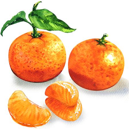 Mandarine mûre ou clémentine avec feuille verte, segments pelés d'agrumes orange, isolé, illustration aquarelle