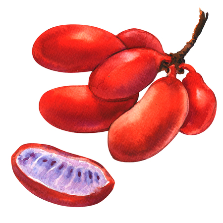 Red ripe uvaria rufa blume fruit, Susung-kalabaw, Carabao teats, isolated, watercolor illustration on white Stock Photo