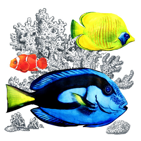 Marine coral fish with corals, isolated. Colorful sea fishes in aquarium. Watercolor illustration on white background