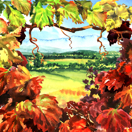 Vineyard frame with beautiful village rural landscape, field, meadows, sunny day, hand drawn watercolor illustration