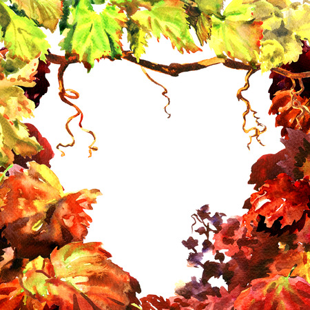 Branch of vine leaves, vineyard frame, grapevine border, isolated, hand drawn watercolor illustration, white background