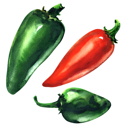 Set of green, red hot chili peppers, Jalapeno pepper, isolated, hand drawn watercolor illustration on white